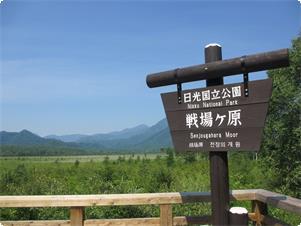 戦場ヶ原は木道のハイキングコースが整備されており人気のハイキングコースです。