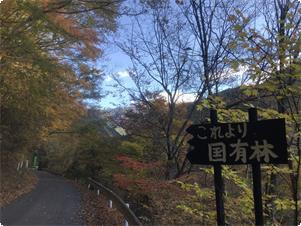 宿までは国道から林道を車で30分走り、途中からは国有林です。