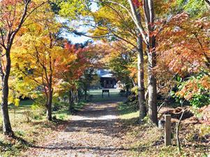 紅葉のトンネル包まれる秋のアトリエ