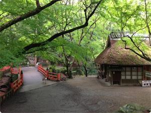 当館右石段下にあります水谷茶屋の新緑、秋にはこの新緑が燃え立つように紅葉します。