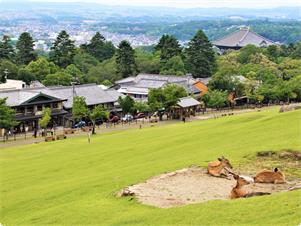若草山から当館の眺め