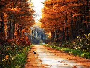 色付く秋の農道