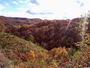 色付く秋の山々
