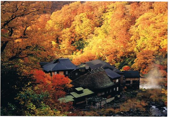 Kuroyu in autumn leaves