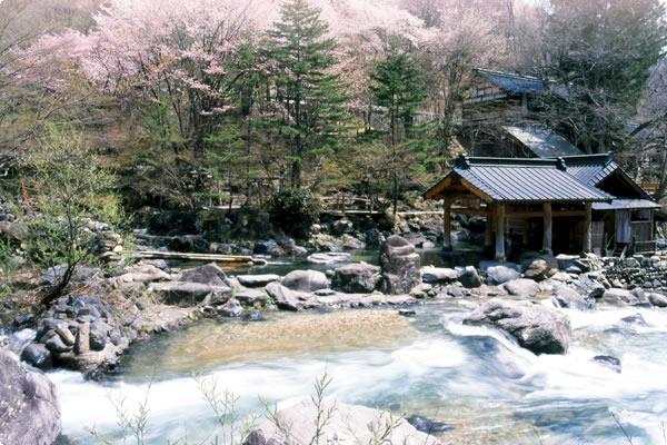 春、山桜に囲まれた「摩訶の湯」(混浴100畳)